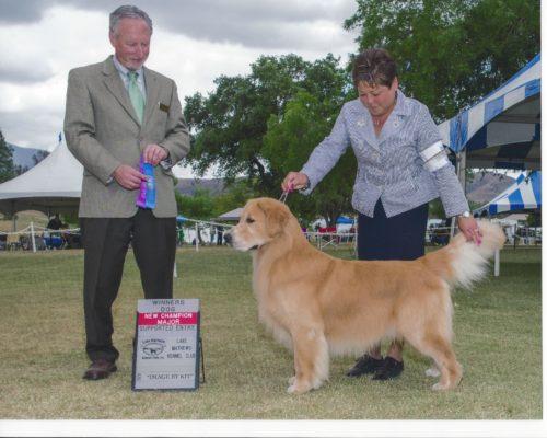 New Champion Aslan